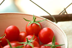 De vers Geplukte Tomaten van de Kers Stock Afbeelding