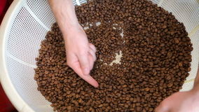 De vers geroosterde koffiebonen in witte mand Barista controleert de kwaliteit van koffiebonen stock footage