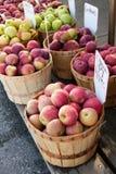 De verscheidenheden van de appel in rij van bushelmanden Royalty-vrije Stock Foto's