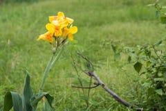 De verscheidenheden van de bloementuin van geel Stock Afbeeldingen