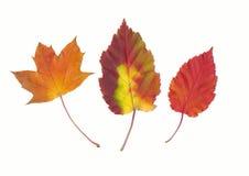 De verschillende bladeren van de herfst Stock Afbeeldingen
