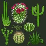 De verschillende cactus typt realistische vector geplaatste pictogrammen Royalty-vrije Stock Foto's
