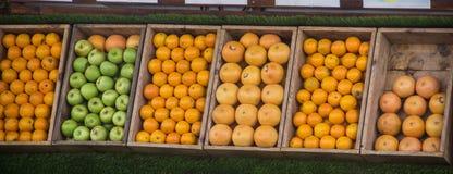 De verschillende citrusvruchten worden opgemaakt in dozen in rijen royalty-vrije stock foto's
