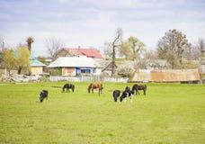 De verschillende landbouwbedrijfdieren weiden op weide stock afbeeldingen