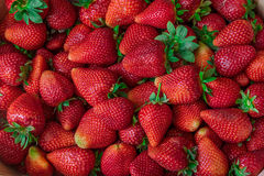 De verse Achtergrond van de Aardbei Vers fruit Royalty-vrije Stock Foto's