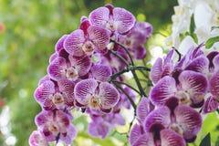 De verse bloem van de boeketorchidee in aard royalty-vrije stock foto