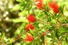 De verse bloemen van Nice Royalty-vrije Stock Foto's