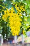 De verse bloemen zijn gouden geel Stock Afbeeldingen