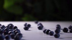 De verse bosbessen rolt op een witte lijst met groene installaties op de achtergrond stock video