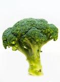 De verse broccoli solated op een witte achtergrond Stock Afbeelding