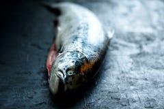 De verse donkere zwarte concrete achtergrond van zalmvissen die op het indienen wordt voorbereid Exemplaar ruimte, hoogste mening Stock Afbeeldingen