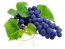 De verse druivencluster met doorbladert stock afbeeldingen