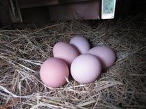 De Verse Eieren van het landbouwbedrijf Stock Foto's