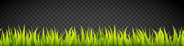 De verse en groene lijnen van de grasbanner Kruiden de groeibekleding De deklaag van het sportgebied royalty-vrije illustratie