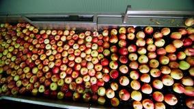 De verse geplukte appel oogst het proces om appelen in een fruitproductie-installatie te wassen, Speciaal bad, die ton inpakken b stock footage