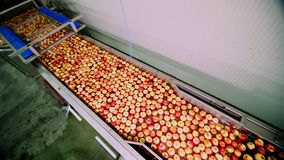 De verse geplukte appel oogst het proces om appelen in een fruitproductie-installatie te wassen, Speciaal bad, die ton inpakken b stock videobeelden