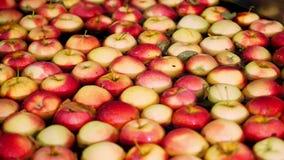 De verse geplukte appel oogst het proces om appelen in een fruitproductie-installatie te wassen, Speciaal bad, die ton inpakken b stock video