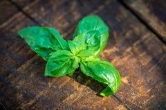 De verse Groene bladeren van het Basilicum Stock Foto's