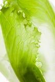 De verse groene close-up van de slasalade royalty-vrije stock afbeeldingen