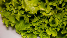 De verse Groene die bladeren van de slasalade op witte achtergrond worden geïsoleerd Stock Foto