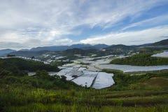 De verse groene mening van de theeaanplanting dichtbij de berg met mooie blauwe hemel in Cameron Highland Stock Afbeeldingen