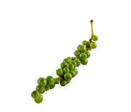 De verse groene paprika isoleert Stock Foto