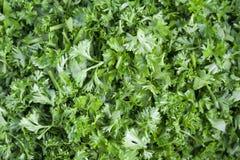 De verse groene peterselie van de besnoeiing. royalty-vrije stock afbeelding