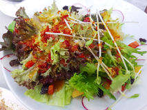 De verse groene salade is groot voor u Royalty-vrije Stock Afbeeldingen