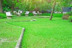 De verse groene yard van het tapijtgras, vlot gazon in mooie tuin en het goede zorg modelleren in het openbare park stock fotografie