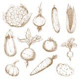 De verse groenten overhandigen getrokken schetsen Stock Afbeeldingen