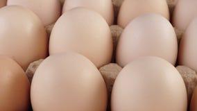 De verse grote kippeneieren roteren op een tribune stock video