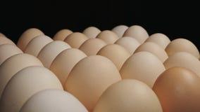 De verse grote kippeneieren roteren op een tribune stock footage
