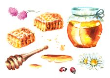 De verse honingselementen plaatsen met honingraten, honingsdipper, fles, bloem, kamille, klaver en lieveheersbeestje Getrokken wa vector illustratie