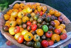 De verse Inlandse Tomaten van de Landbouwersmarkt Stock Afbeeldingen