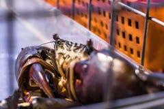 De verse levende krab van de Zwarte Zee bond kooi in zeevruchtenmarkt vast Stock Afbeelding
