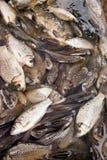 De verse markt van de vissenstraat Stock Foto
