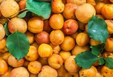 De verse naadloze achtergrond van de abrikozen stevige textuur royalty-vrije stock foto