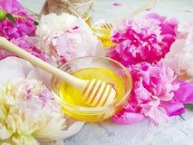 De verse oogst van de honings bloeiende pioen op een grijs beton royalty-vrije stock foto's