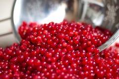 de verse oogst van rode aalbesbessen in metaalvergiet royalty-vrije stock foto