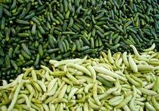 De verse Organische Augurken van de Komkommer Stock Foto