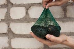 De verse organische hassavocado's in een groen koord doen in mannelijke handen op een bakstenen muurachtergrond in zakken, gezond royalty-vrije stock afbeelding