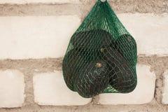 De verse organische hassavocado's in een groen koord doen op een bakstenen muurachtergrond in zakken, gezond voedselconcept, exem stock fotografie