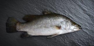 De verse overzeese baarzen vissen voor het koken Ruwe zeebaars oceaan gastronomisch op donkere achtergrond in het restaurant royalty-vrije stock foto