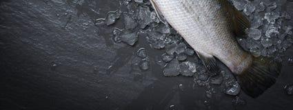 De verse overzeese baarzen vissen voor het koken van Ruwe zeebaars op ijs oceaan gastronomisch op donkere achtergrond in het rest stock afbeelding