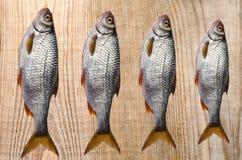 De verse riviervis, ligt op de raad Royalty-vrije Stock Afbeeldingen