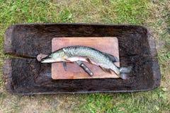 De verse ruwe die vis is de snoek en klaar voor het snijden en het koken op een houten scherpe Raad naast mes wordt gepeld close- Stock Afbeelding