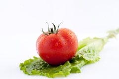 De verse tomaten voor salade Royalty-vrije Stock Foto