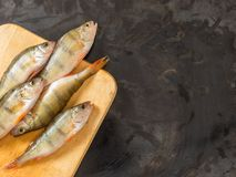 De verse toppositie van riviervissen Op een zwarte achtergrond Vrije ruimte voor te royalty-vrije stock afbeelding