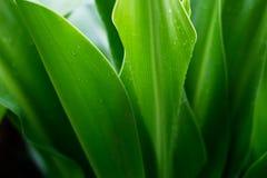 De verse tropische aard van het groene installatieblad na de regen, zachte nadruk Stock Afbeelding
