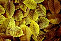 De Verse tropische Geelgroene bladerenachtergrond Royalty-vrije Stock Fotografie